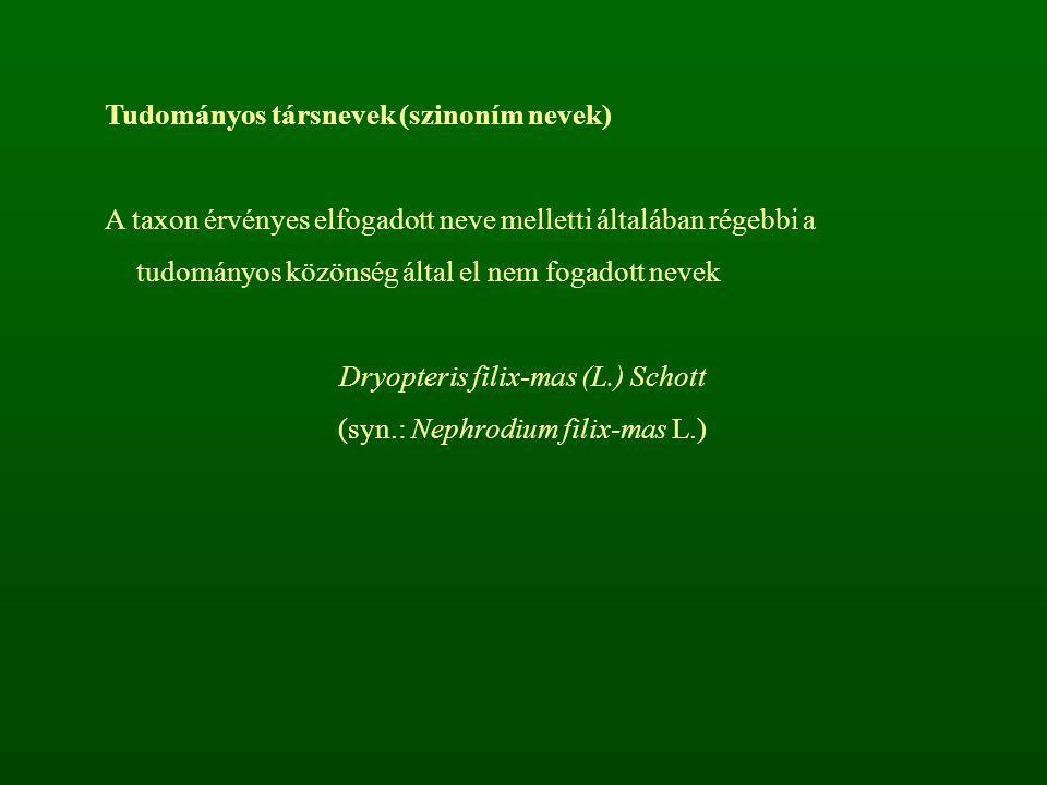Tudományos társnevek (szinoním nevek) A taxon érvényes elfogadott neve melletti általában régebbi a tudományos közönség által el nem fogadott nevek Dryopteris filix-mas (L.) Schott (syn.: Nephrodium filix-mas L.)