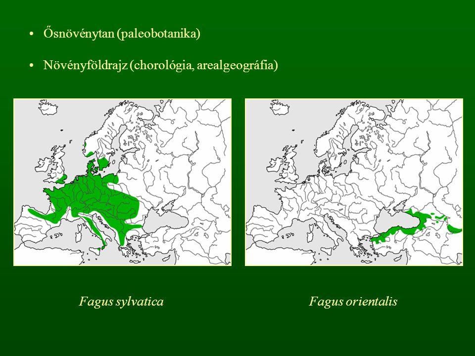 Ősnövénytan (paleobotanika) Növényföldrajz (chorológia, arealgeográfia) Fagus sylvaticaFagus orientalis