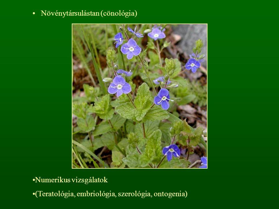 Növénytársulástan (cönológia) Numerikus vizsgálatok (Teratológia, embriológia, szerológia, ontogenia)