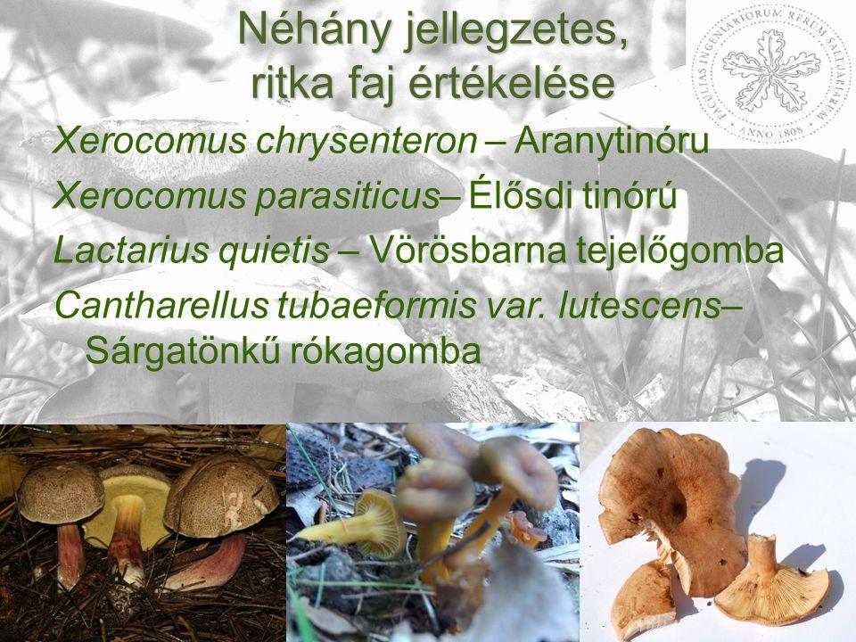Néhány jellegzetes, ritka faj értékelése Xerocomus chrysenteron – Aranytinóru Xerocomus parasiticus– Élősdi tinórú Lactarius quietis – Vörösbarna tejelőgomba Cantharellus tubaeformis var.