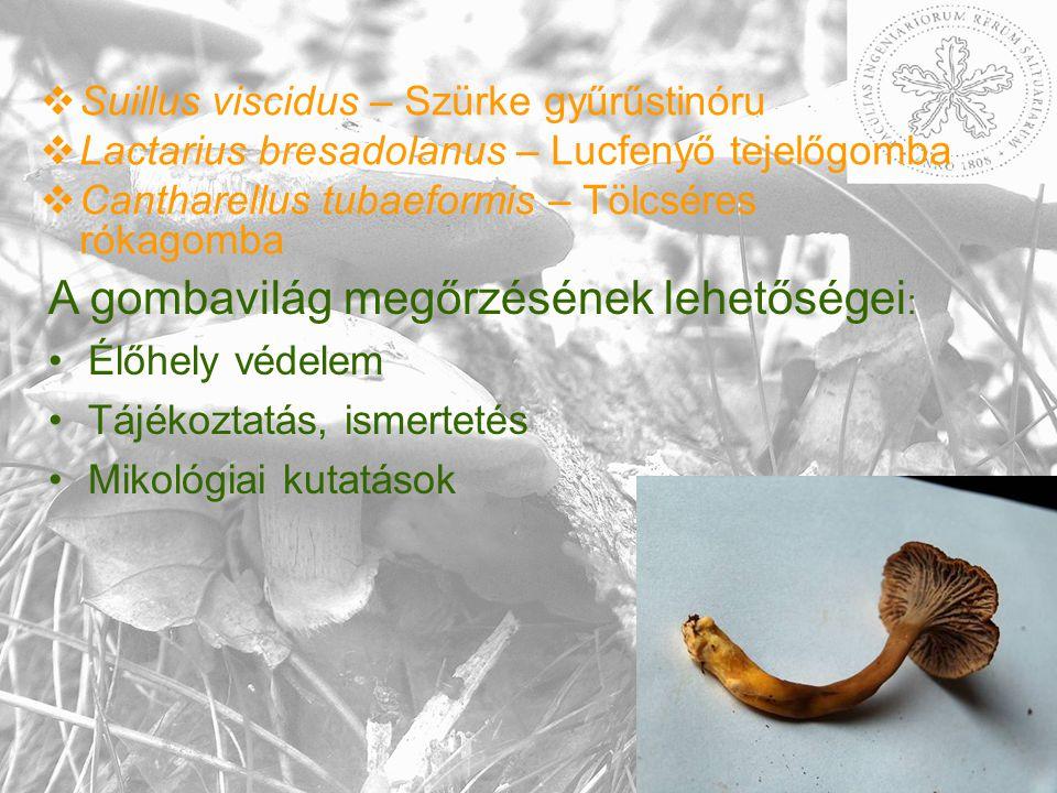  Suillus viscidus – Szürke gyűrűstinóru  Lactarius bresadolanus – Lucfenyő tejelőgomba  Cantharellus tubaeformis – Tölcséres rókagomba A gombavilág megőrzésének lehetőségei : Élőhely védelem Tájékoztatás, ismertetés Mikológiai kutatások