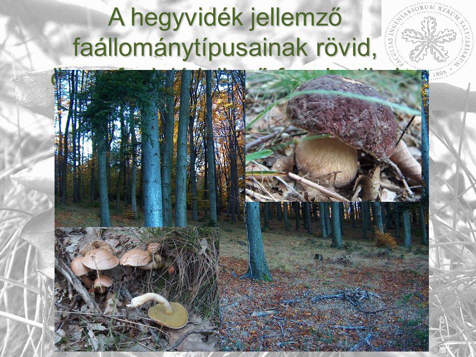  Gyertyános tölgyesek, elegyes bükkösök  Fenyő elegyes, gyertyános - kocsánytalantölgyesek, fenyő elegyes- bükkösök  Acidofil gyertyános- kocsánytalantölgyesek, bükkösök  Acidofil fenyő elegyes, gyertyános- kocsánytalantölgyesek, bükkösök A hegyvidék jellemző faállománytípusainak rövid, összefoglaló jellegű fungisztikai értékelése.