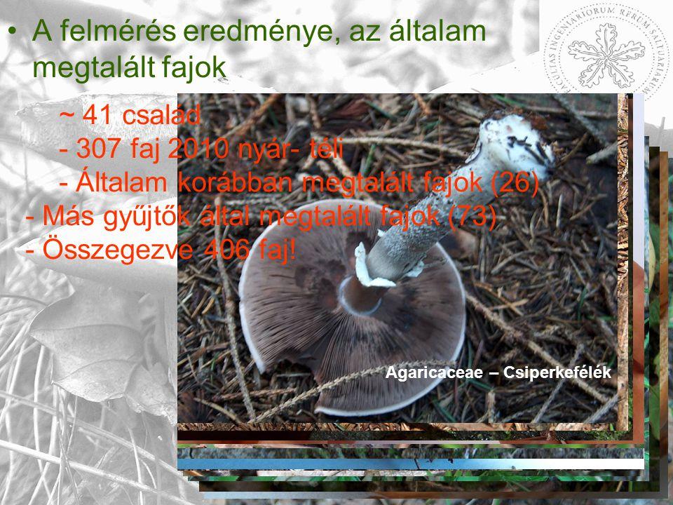 A felmérés eredménye, az általam megtalált fajok Entolomataceae – Döggombafélék Hydnaceae – Gerebenfélék Amanitaceae – Galócák.