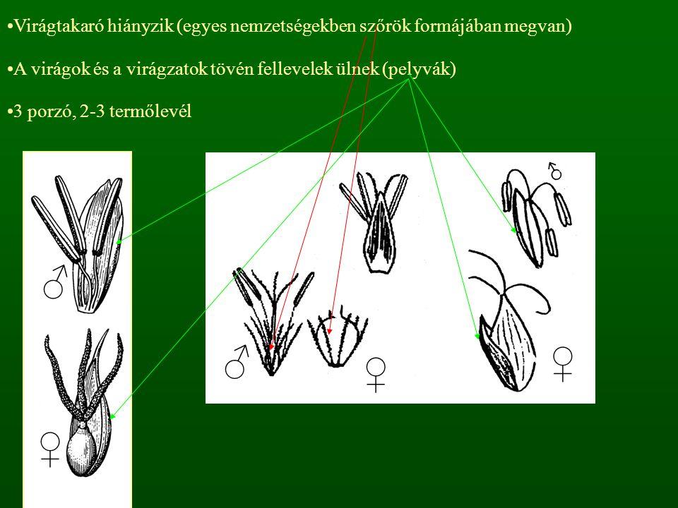 Virágtakaró hiányzik (egyes nemzetségekben szőrök formájában megvan) A virágok és a virágzatok tövén fellevelek ülnek (pelyvák) 3 porzó, 2-3 termőlevé