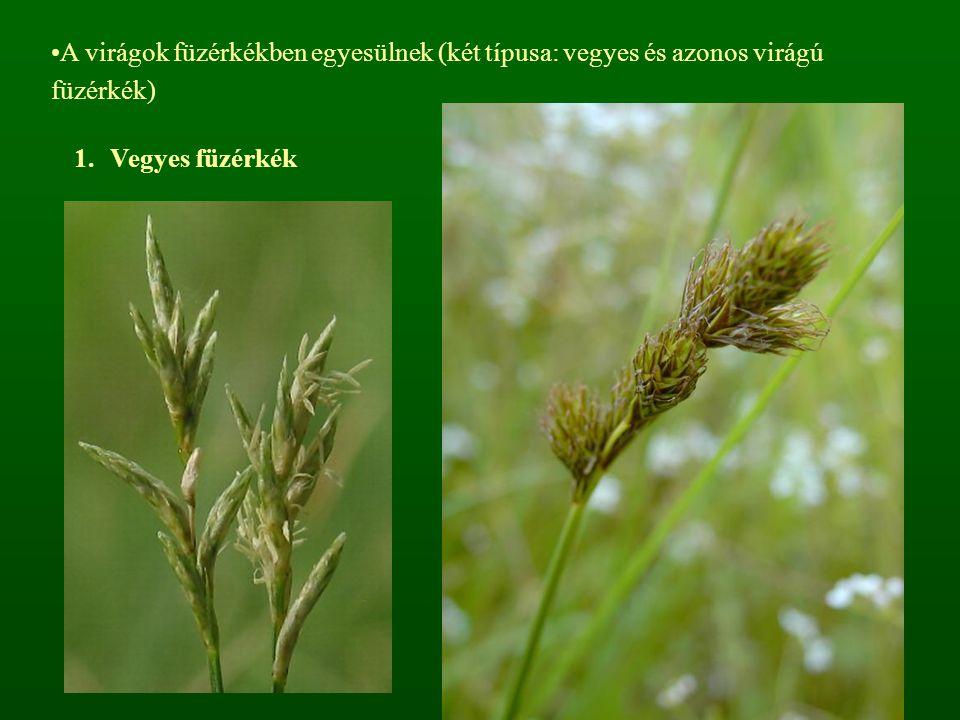 A virágok füzérkékben egyesülnek (két típusa: vegyes és azonos virágú füzérkék) 1.Vegyes füzérkék