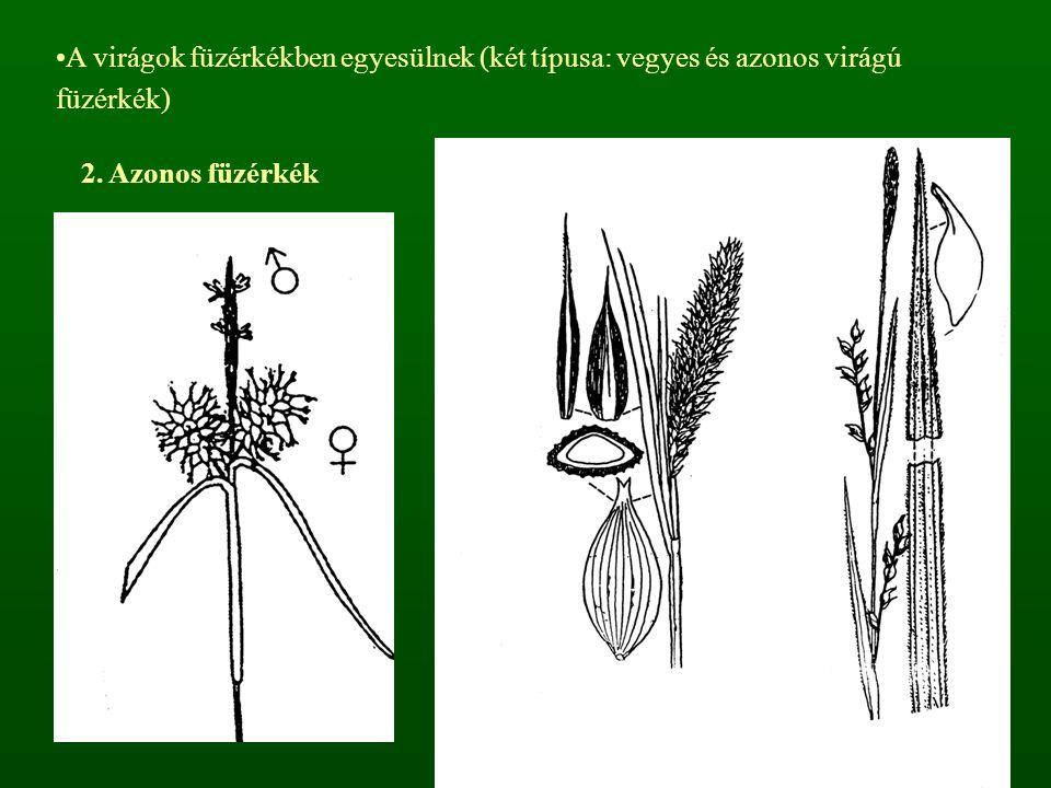 A virágok füzérkékben egyesülnek (két típusa: vegyes és azonos virágú füzérkék) 2. Azonos füzérkék
