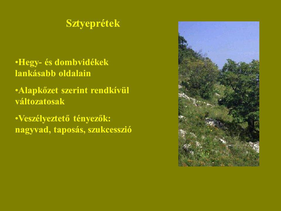 Sztyeprétek Hegy- és dombvidékek lankásabb oldalain Alapkőzet szerint rendkívül változatosak Veszélyeztető tényezők: nagyvad, taposás, szukcesszió
