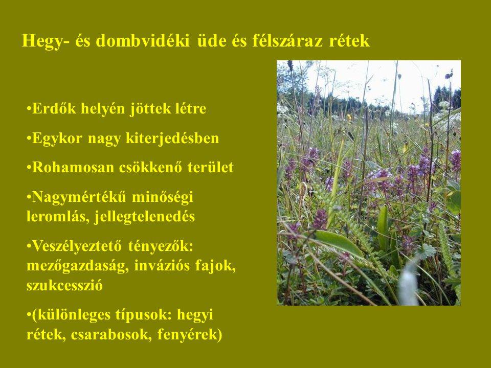 Hegy- és dombvidéki üde és félszáraz rétek Erdők helyén jöttek létre Egykor nagy kiterjedésben Rohamosan csökkenő terület Nagymértékű minőségi leromlá