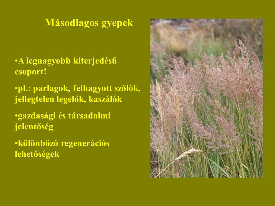 Másodlagos gyepek A legnagyobb kiterjedésű csoport! pl.: parlagok, felhagyott szőlők, jellegtelen legelők, kaszálók gazdasági és társadalmi jelentőség