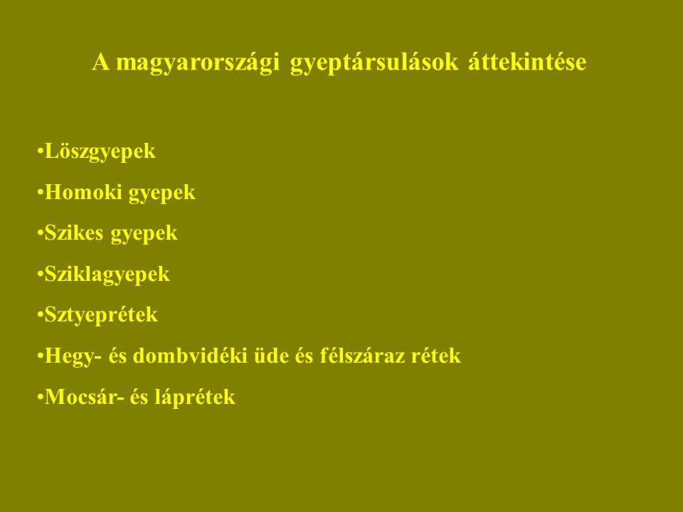 A magyarországi gyeptársulások áttekintése Löszgyepek Homoki gyepek Szikes gyepek Sziklagyepek Sztyeprétek Hegy- és dombvidéki üde és félszáraz rétek