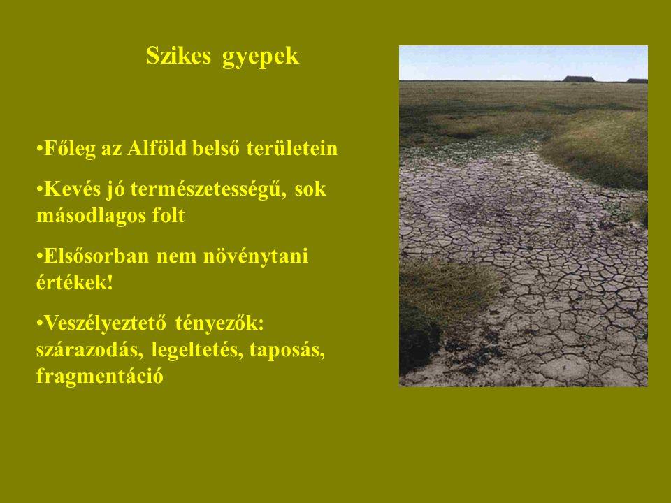 Szikes gyepek Főleg az Alföld belső területein Kevés jó természetességű, sok másodlagos folt Elsősorban nem növénytani értékek! Veszélyeztető tényezők
