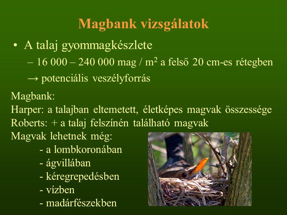 Magbank vizsgálatok A talaj gyommagkészlete –16 000 – 240 000 mag / m 2 a felső 20 cm-es rétegben → potenciális veszélyforrás Magbank: Harper: a talaj