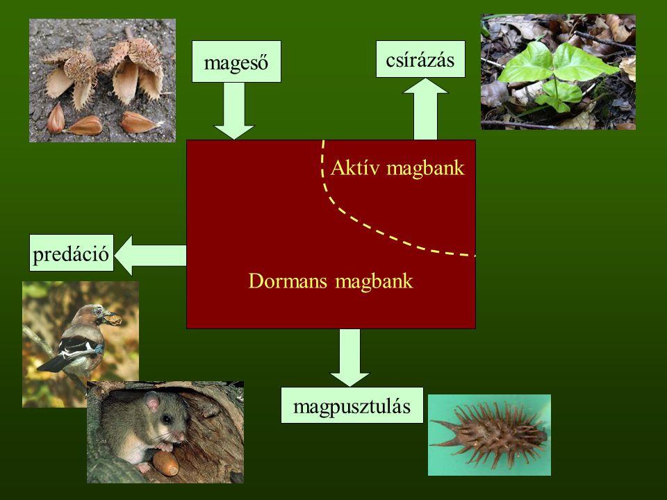 Aktív magbank Dormans magbank mageső csírázás magpusztulás predáció