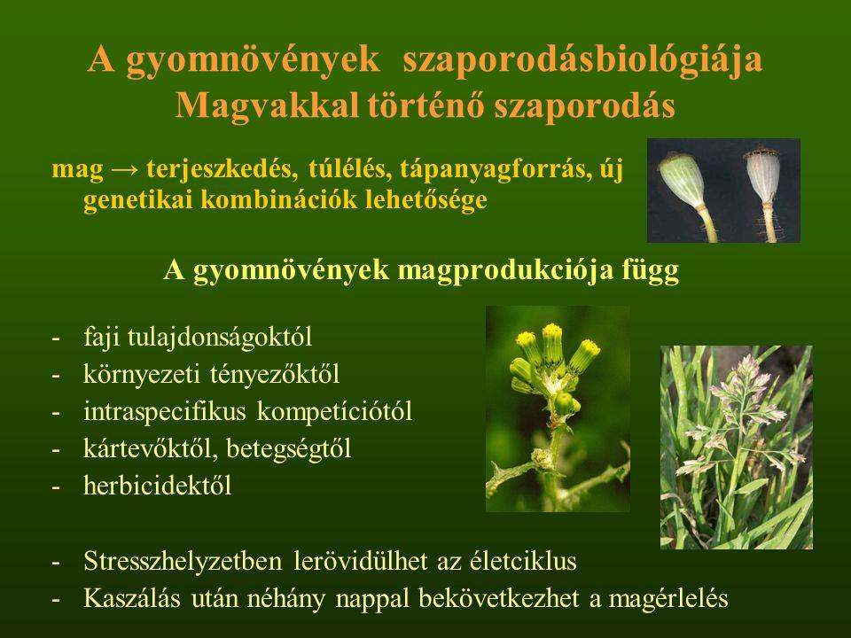 A gyomnövények szaporodásbiológiája Magvakkal történő szaporodás mag → terjeszkedés, túlélés, tápanyagforrás, új genetikai kombinációk lehetősége A gy