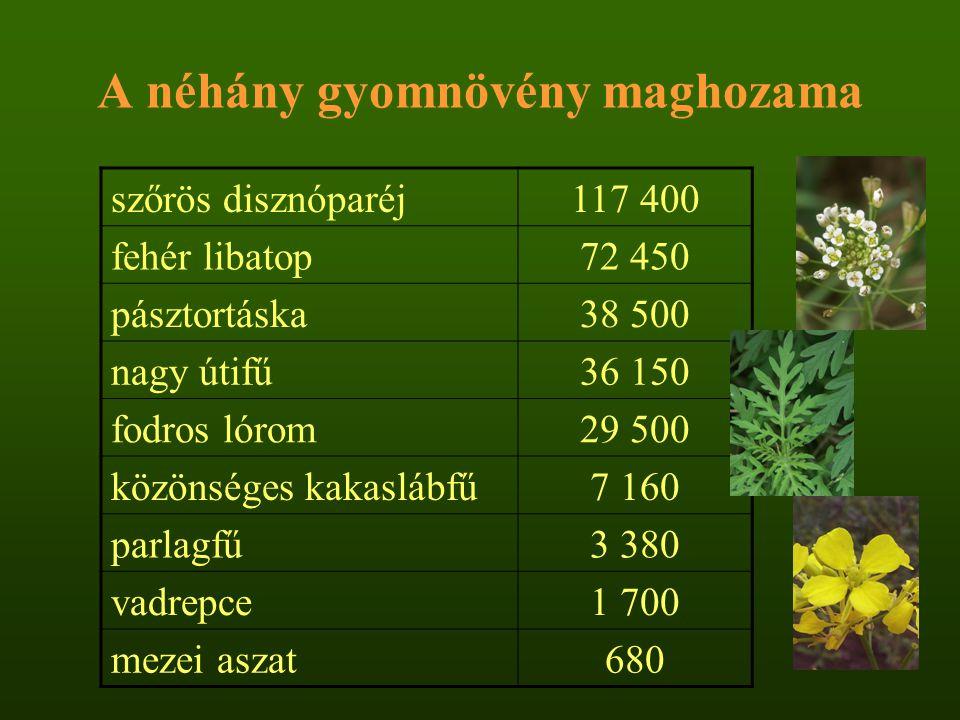 A gyommagvak életképessége Beal-féle százéves tartamkísérlet (1879-1979): –23 faj magját 90 cm mélységben tárolta –5-10 évenként 50-50 magot csíráztatta –legtöbb gyommag kb.