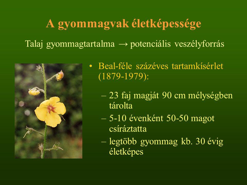 A gyommagvak életképessége Beal-féle százéves tartamkísérlet (1879-1979): –23 faj magját 90 cm mélységben tárolta –5-10 évenként 50-50 magot csíráztat