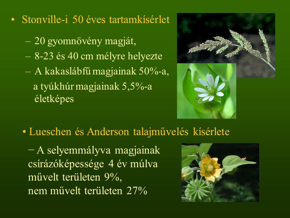 Stonville-i 50 éves tartamkísérlet –20 gyomnövény magját, –8-23 és 40 cm mélyre helyezte –A kakaslábfű magjainak 50%-a, a tyúkhúr magjainak 5,5%-a éle