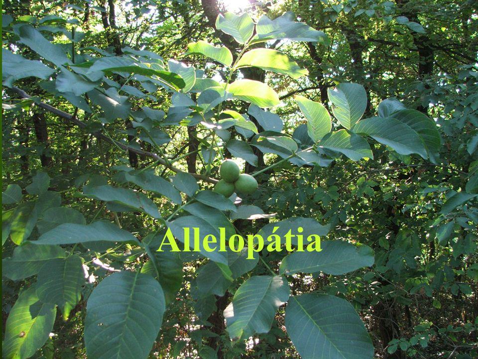 Az allelopátiának szerepe lehet: - a magprodukcióban, - az erdők felújulásában és regenerációjában, - az erdősítés során, - az erdők szerkezetének alakulásában, - a biomassza produkciójában, - a szukcessziós folyamatokban, - és az erdővédelemben.
