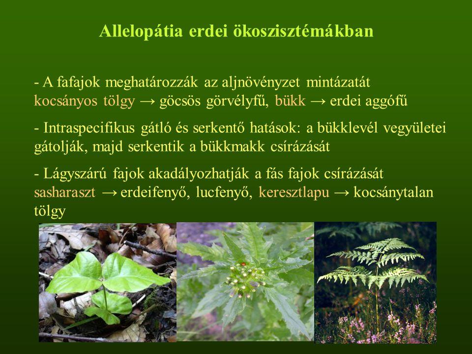 Allelopátia erdei ökoszisztémákban - A fafajok meghatározzák az aljnövényzet mintázatát kocsányos tölgy → göcsös görvélyfű, bükk → erdei aggófű - Intraspecifikus gátló és serkentő hatások: a bükklevél vegyületei gátolják, majd serkentik a bükkmakk csírázását - Lágyszárú fajok akadályozhatják a fás fajok csírázását sasharaszt → erdeifenyő, lucfenyő, keresztlapu → kocsánytalan tölgy