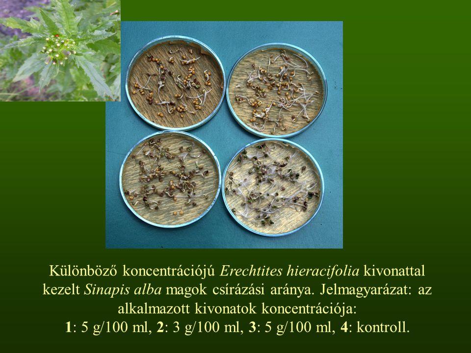 Különböző koncentrációjú Erechtites hieracifolia kivonattal kezelt Sinapis alba magok csírázási aránya.
