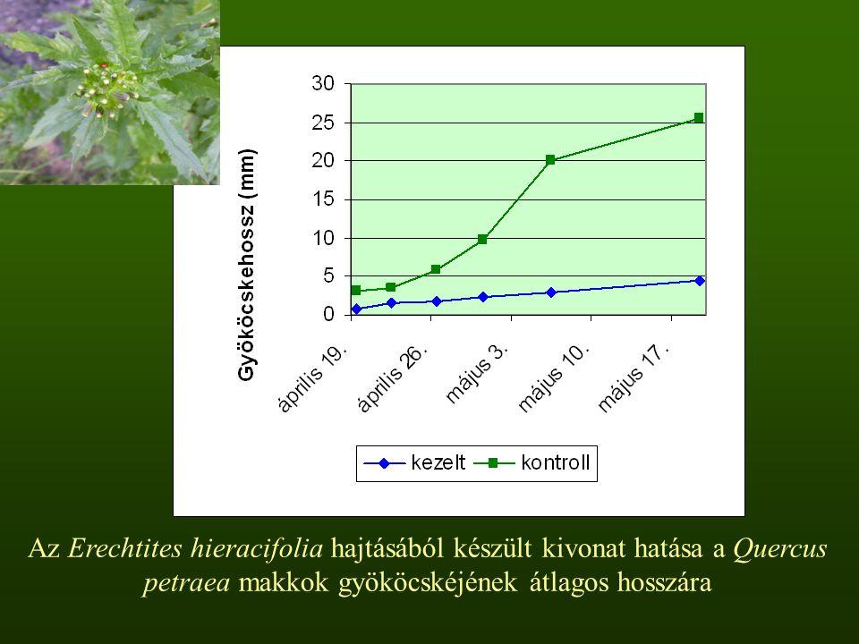 Az Erechtites hieracifolia hajtásából készült kivonat hatása a Quercus petraea makkok gyököcskéjének átlagos hosszára