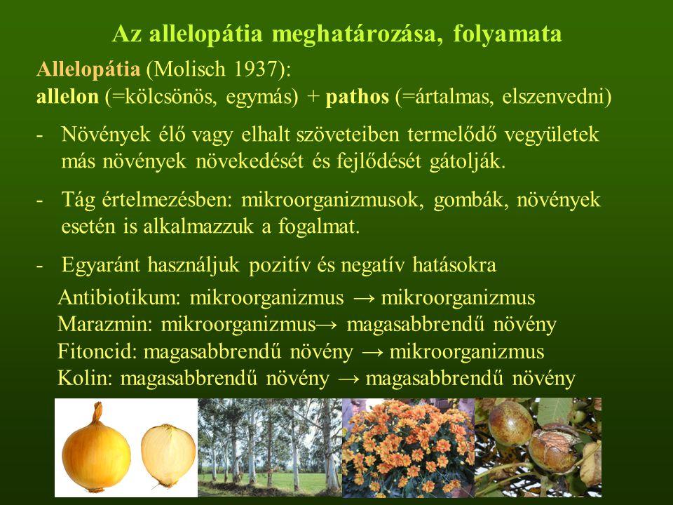 Az allelopátia meghatározása, folyamata Allelopátia (Molisch 1937): allelon (=kölcsönös, egymás) + pathos (=ártalmas, elszenvedni) -Növények élő vagy elhalt szöveteiben termelődő vegyületek más növények növekedését és fejlődését gátolják.