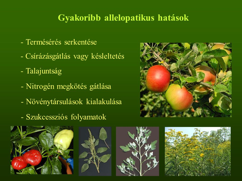 - Termésérés serkentése - Csírázásgátlás vagy késleltetés - Talajuntság - Nitrogén megkötés gátlása - Növénytársulások kialakulása - Szukcessziós folyamatok Gyakoribb allelopatikus hatások