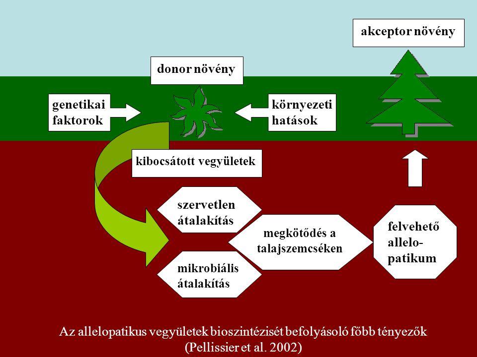 genetikai faktorok környezeti hatások donor növény szervetlen átalakítás mikrobiális átalakítás megkötődés a talajszemcséken felvehető allelo- patikum akceptor növény kibocsátott vegyületek Az allelopatikus vegyületek bioszintézisét befolyásoló főbb tényezők (Pellissier et al.