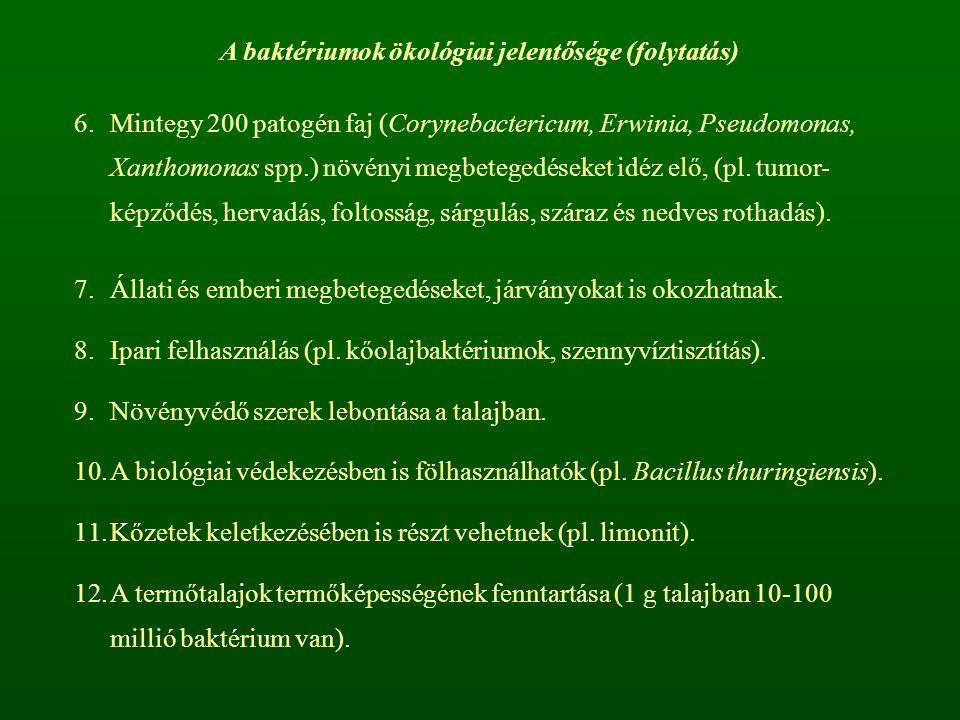 A baktériumok ökológiai jelentősége (folytatás) 6.Mintegy 200 patogén faj (Corynebactericum, Erwinia, Pseudomonas, Xanthomonas spp.) növényi megbetegedéseket idéz elő, (pl.