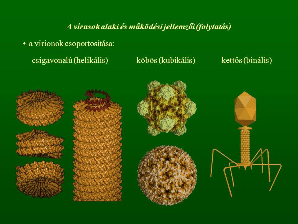 A vírusok alaki és működési jellemzői (folytatás) a virionok csoportosítása: csigavonalú (helikális)köbös (kubikális)kettős (binális)