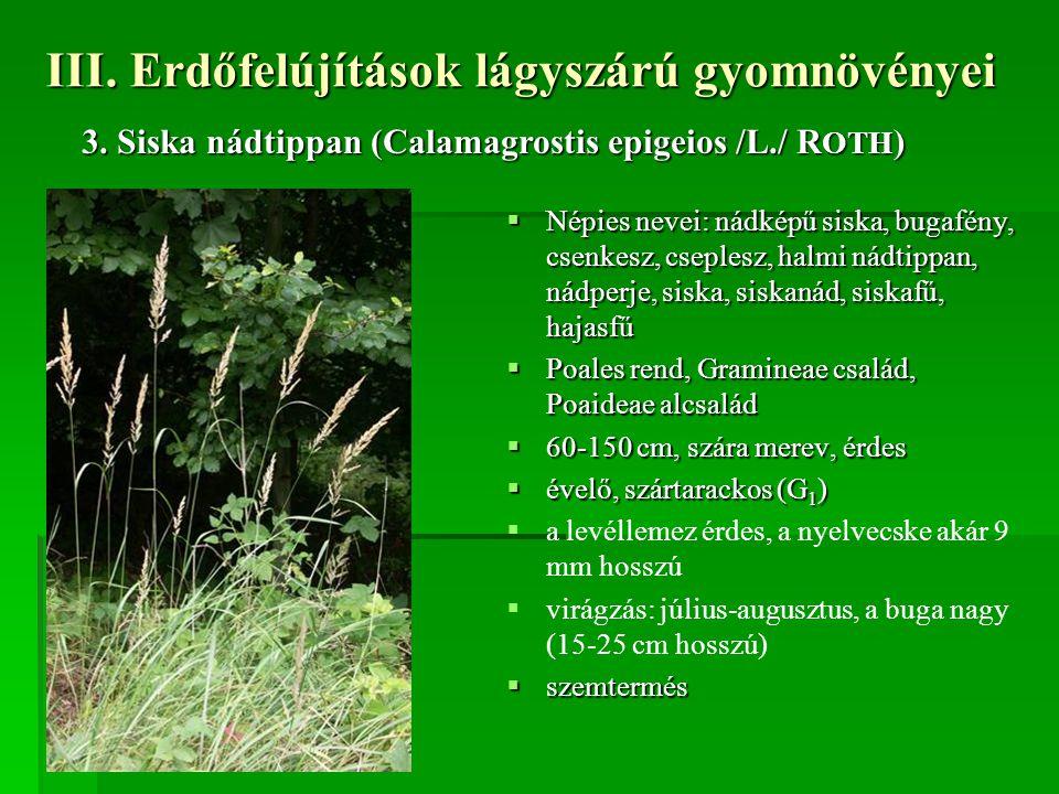III. Erdőfelújítások lágyszárú gyomnövényei  Népies nevei: nádképű siska, bugafény, csenkesz, cseplesz, halmi nádtippan, nádperje, siska, siskanád, s