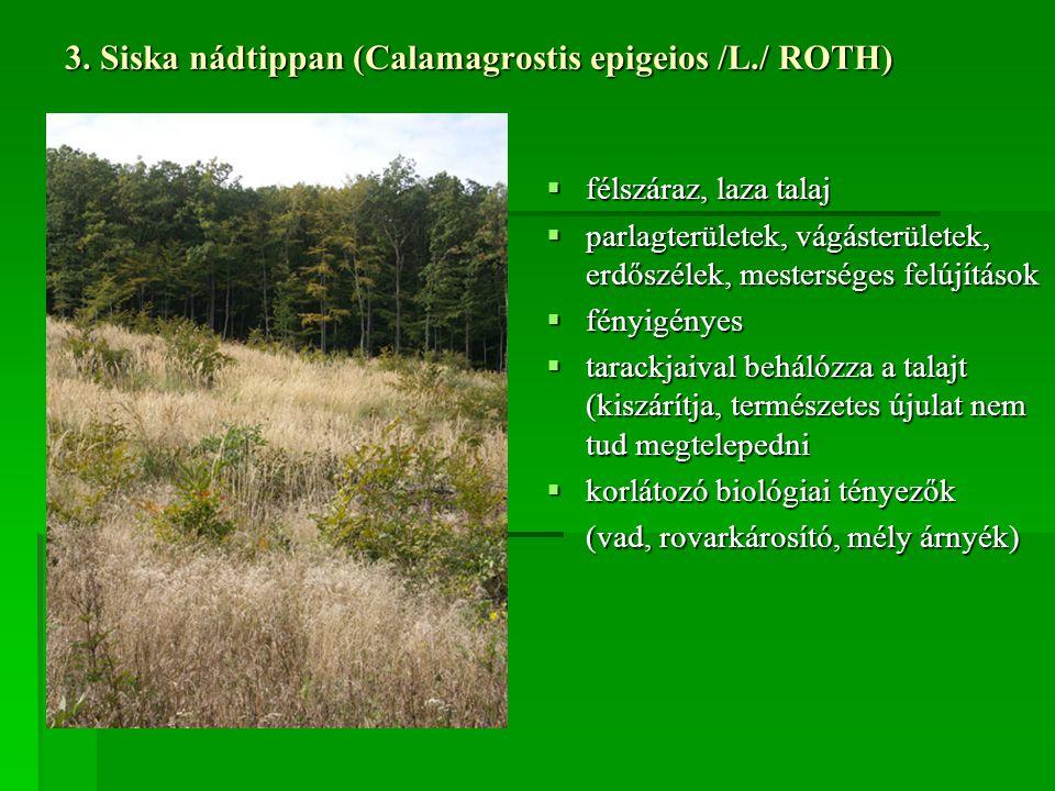 3. Siska nádtippan (Calamagrostis epigeios /L./ ROTH)  félszáraz, laza talaj  parlagterületek, vágásterületek, erdőszélek, mesterséges felújítások 