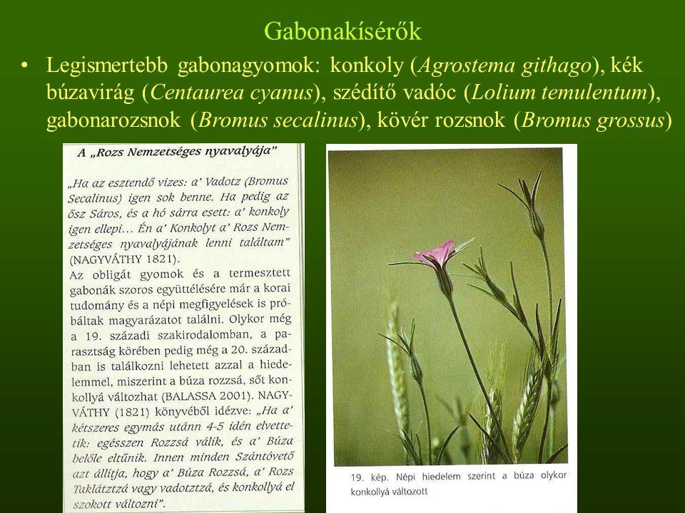 Gabonakísérők Legismertebb gabonagyomok: konkoly (Agrostema githago), kék búzavirág (Centaurea cyanus), szédítő vadóc (Lolium temulentum), gabonarozsn