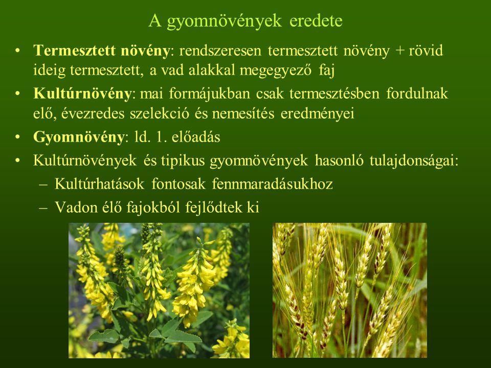 A gyomnövények eredete Termesztett növény: rendszeresen termesztett növény + rövid ideig termesztett, a vad alakkal megegyező faj Kultúrnövény: mai formájukban csak termesztésben fordulnak elő, évezredes szelekció és nemesítés eredményei Gyomnövény: ld.
