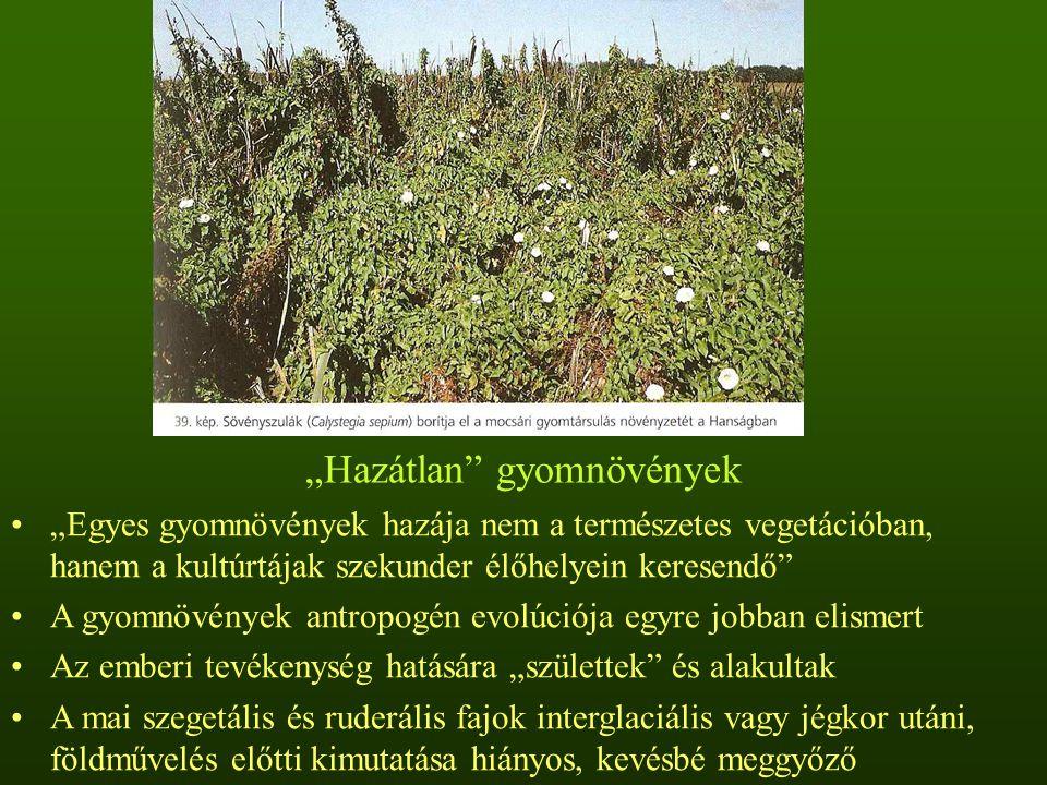 """""""Hazátlan gyomnövények """"Egyes gyomnövények hazája nem a természetes vegetációban, hanem a kultúrtájak szekunder élőhelyein keresendő A gyomnövények antropogén evolúciója egyre jobban elismert Az emberi tevékenység hatására """"születtek és alakultak A mai szegetális és ruderális fajok interglaciális vagy jégkor utáni, földművelés előtti kimutatása hiányos, kevésbé meggyőző"""