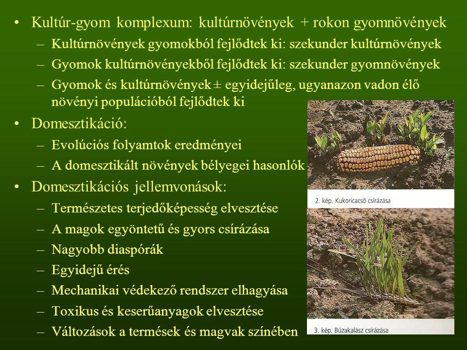 Kultúr-gyom komplexum: kultúrnövények + rokon gyomnövények –Kultúrnövények gyomokból fejlődtek ki: szekunder kultúrnövények –Gyomok kultúrnövényekből