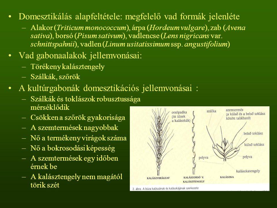 Domesztikálás alapfeltétele: megfelelő vad formák jelenléte –Alakor (Triticum monococcum), árpa (Hordeum vulgare), zab (Avena sativa), borsó (Pisum sa