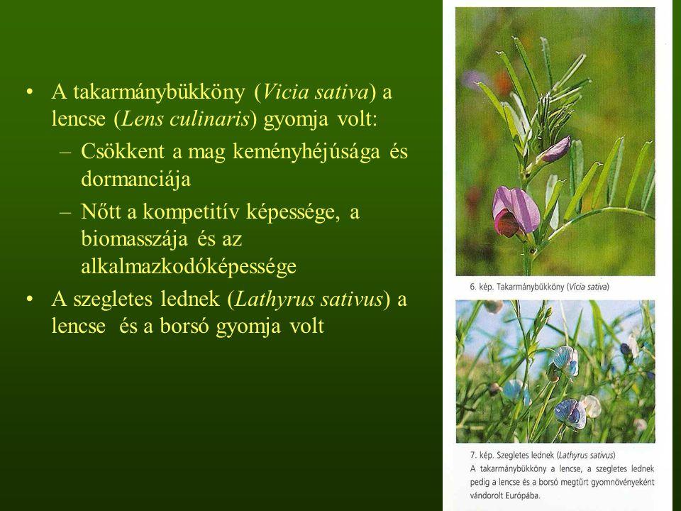 A takarmánybükköny (Vicia sativa) a lencse (Lens culinaris) gyomja volt: –Csökkent a mag keményhéjúsága és dormanciája –Nőtt a kompetitív képessége, a biomasszája és az alkalmazkodóképessége A szegletes lednek (Lathyrus sativus) a lencse és a borsó gyomja volt