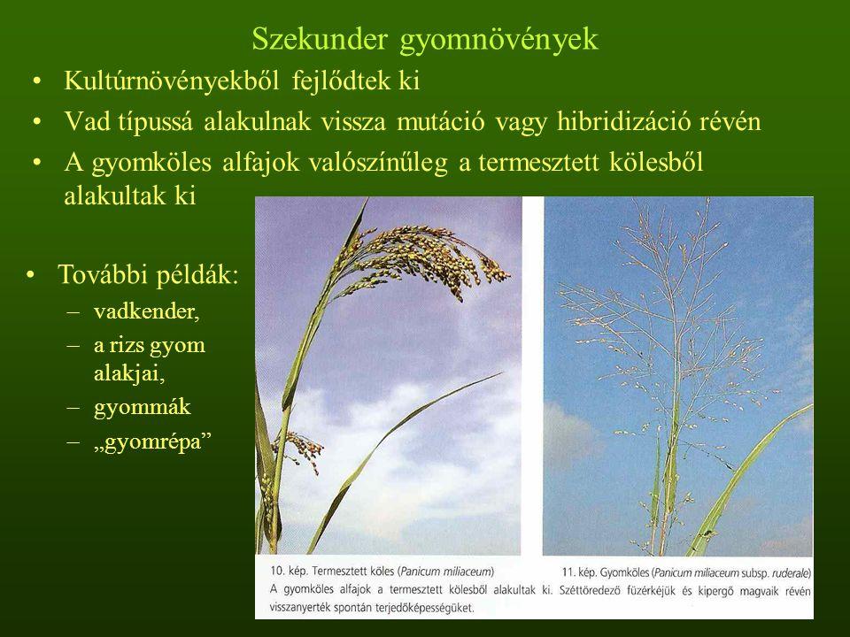 """Szekunder gyomnövények Kultúrnövényekből fejlődtek ki Vad típussá alakulnak vissza mutáció vagy hibridizáció révén A gyomköles alfajok valószínűleg a termesztett kölesből alakultak ki További példák: –vadkender, –a rizs gyom alakjai, –gyommák –""""gyomrépa"""