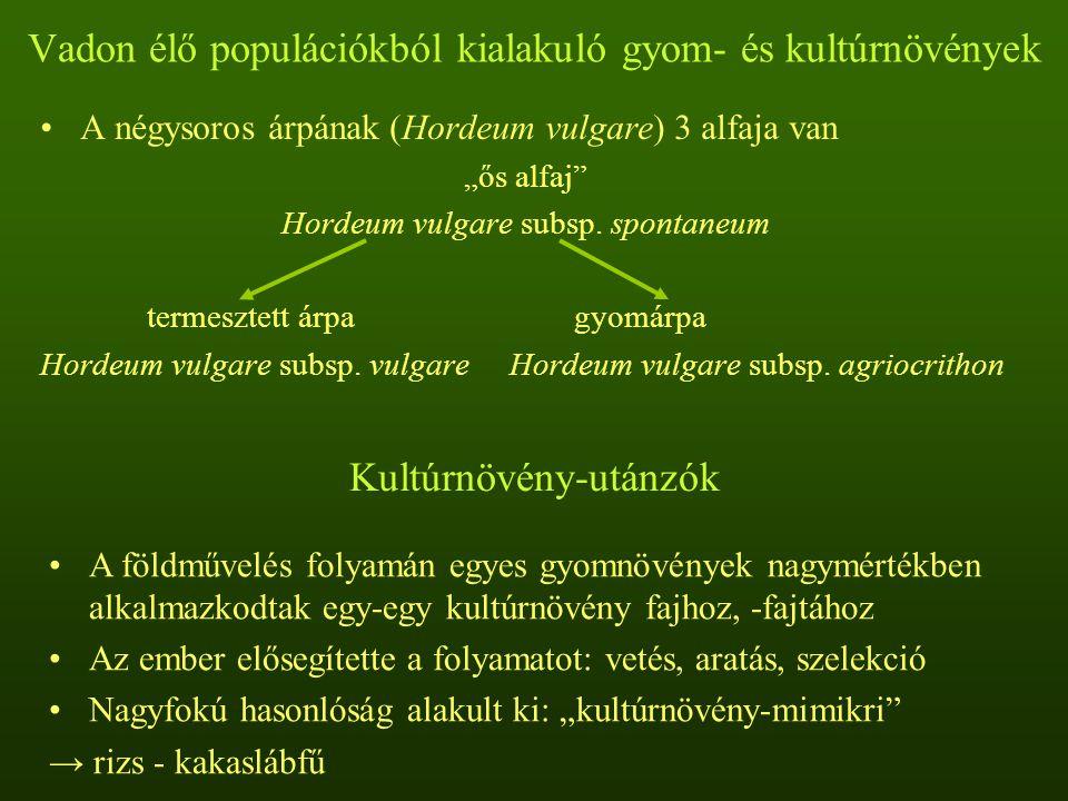 """Vadon élő populációkból kialakuló gyom- és kultúrnövények A négysoros árpának (Hordeum vulgare) 3 alfaja van """"ős alfaj"""" Hordeum vulgare subsp. spontan"""
