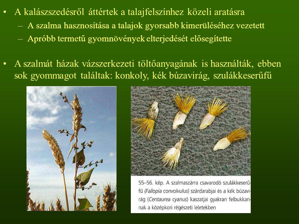 A kalászszedésről áttértek a talajfelszínhez közeli aratásra –A szalma hasznosítása a talajok gyorsabb kimerüléséhez vezetett –Apróbb termetű gyomnövé