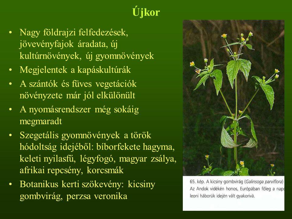 Újkor Nagy földrajzi felfedezések, jövevényfajok áradata, új kultúrnövények, új gyomnövények Megjelentek a kapáskultúrák A szántók és füves vegetációk