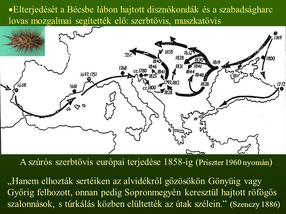  Elterjedését a Bécsbe lábon hajtott disznókondák és a szabadságharc lovas mozgalmai segítették elő: szerbtövis, muszkatövis A szúrós szerbtövis euró