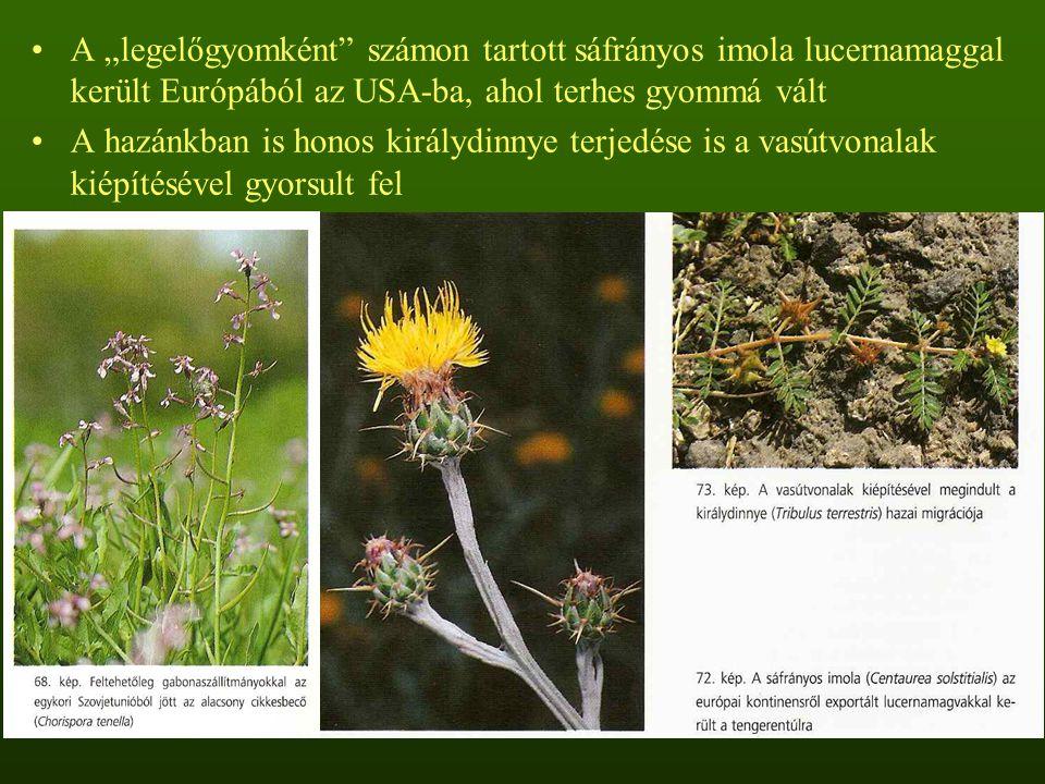 """A """"legelőgyomként"""" számon tartott sáfrányos imola lucernamaggal került Európából az USA-ba, ahol terhes gyommá vált A hazánkban is honos királydinnye"""