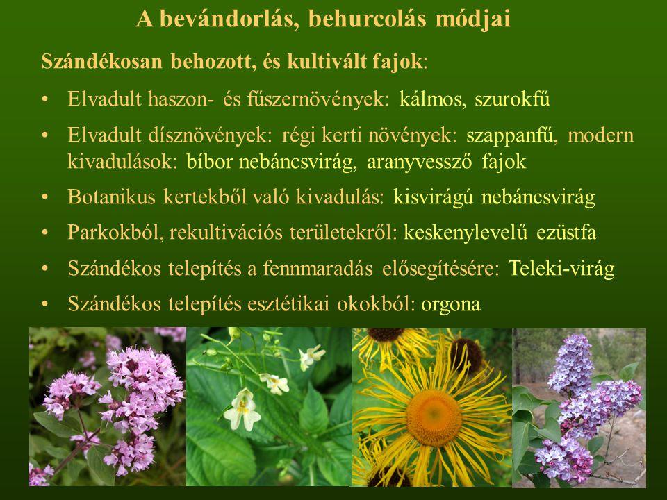 A bevándorlás, behurcolás módjai Szándékosan behozott, és kultivált fajok: Elvadult haszon- és fűszernövények: kálmos, szurokfű Elvadult dísznövények:
