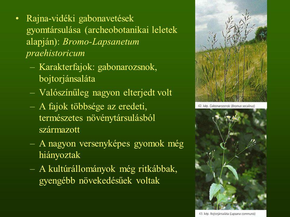 Rajna-vidéki gabonavetések gyomtársulása (archeobotanikai leletek alapján): Bromo-Lapsanetum praehistoricum –Karakterfajok: gabonarozsnok, bojtorjánsaláta –Valószínűleg nagyon elterjedt volt –A fajok többsége az eredeti, természetes növénytársulásból származott –A nagyon versenyképes gyomok még hiányoztak –A kultúrállományok még ritkábbak, gyengébb növekedésűek voltak
