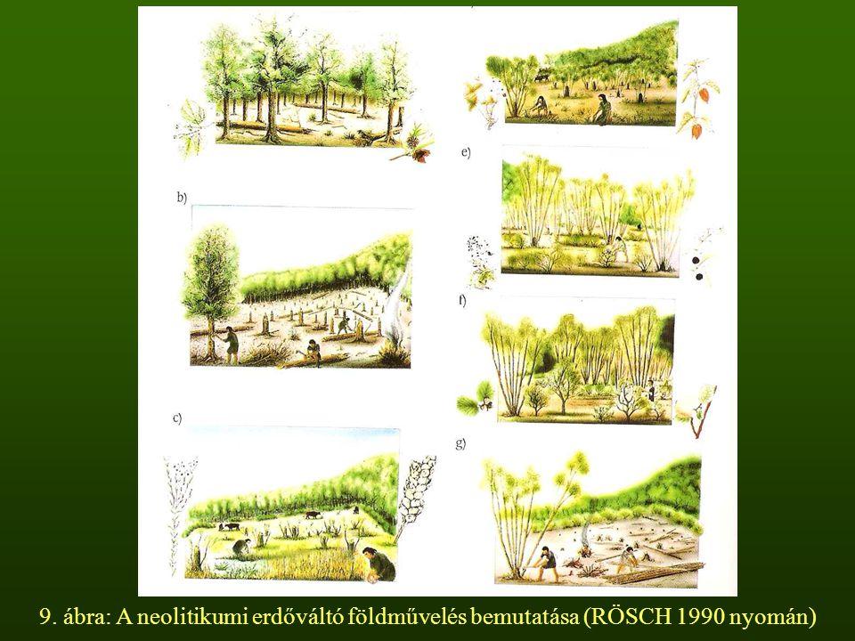 9. ábra: A neolitikumi erdőváltó földművelés bemutatása (RÖSCH 1990 nyomán)