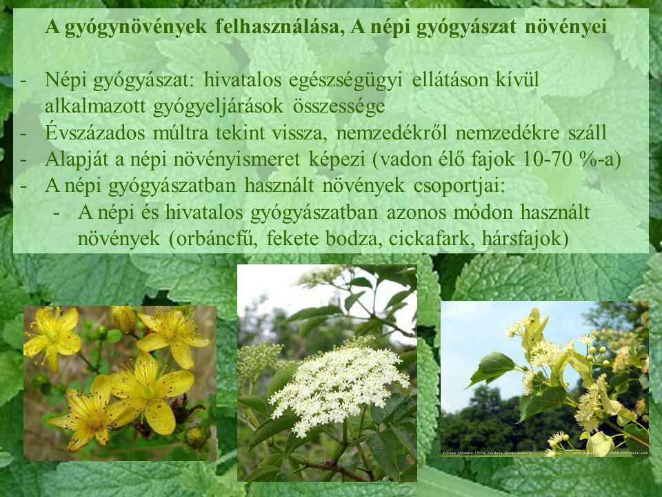 A gyógynövények felhasználása, A népi gyógyászat növényei -Népi gyógyászat: hivatalos egészségügyi ellátáson kívül alkalmazott gyógyeljárások összessé