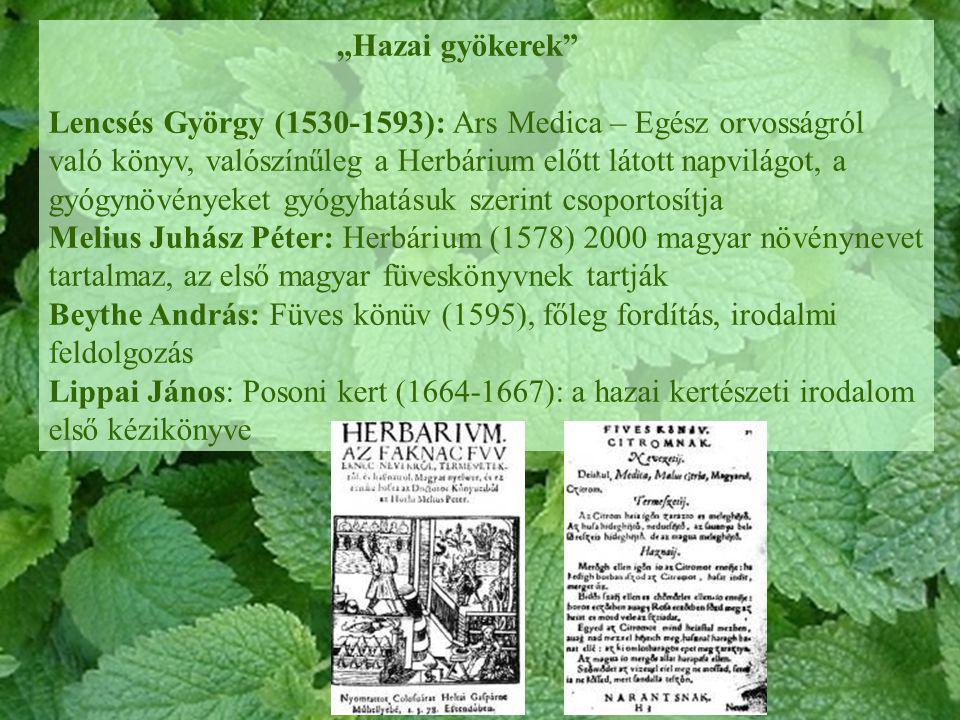 """""""Hazai gyökerek"""" Lencsés György (1530-1593): Ars Medica – Egész orvosságról való könyv, valószínűleg a Herbárium előtt látott napvilágot, a gyógynövén"""