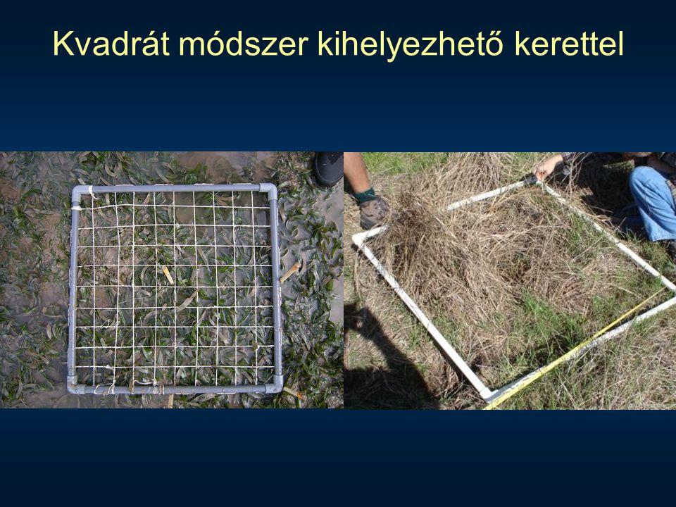 Kvadrát módszer kihelyezhető kerettel
